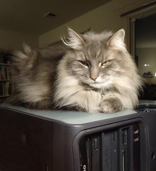 Kat zoekt warmte